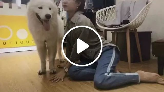 Dog Does Not Want Girl Near In Living Room - Video & GIFs | animals, pets, Dogs, dog breeds, girls, women fashion, living rooms, furniture, apartments