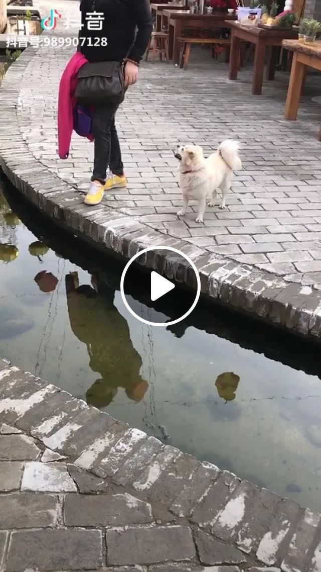 Girl Jumped Over Ditch, But Dog Had A Better Way - Video & GIFs | girls, fashionable clothes, fashion bags, jump, cross, ditch, dog, have a better way, smarter