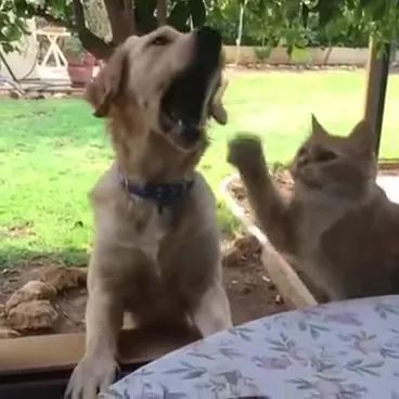 Cat tries to steal food from dog regrets it instantly