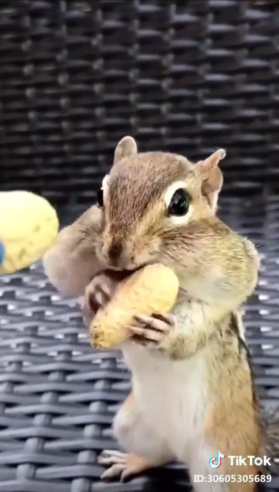 Squirrels like to eat beans
