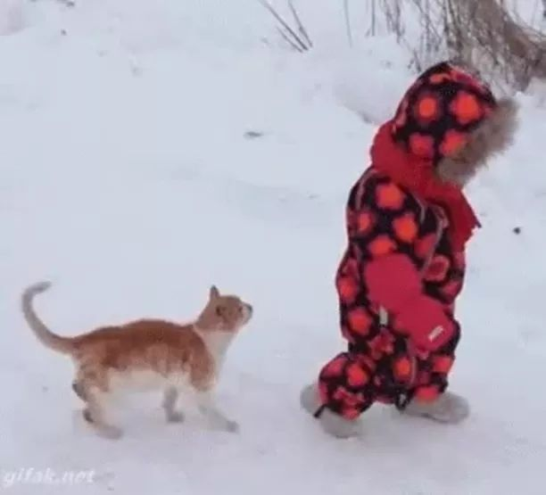 Baby and cat travel in Russia