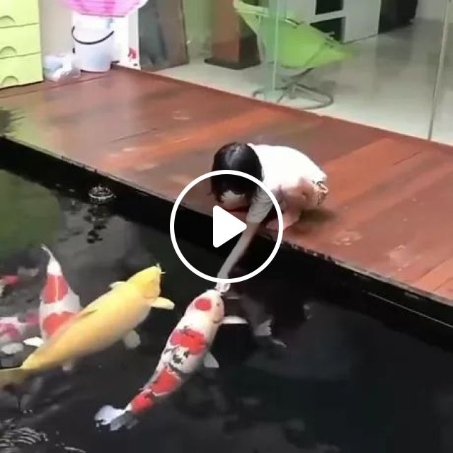 Koi Fish And Humans Are Friends - Video & GIFs   friendly animals, fish scenes, koi fish, tank fish, cute kids, baby clothes