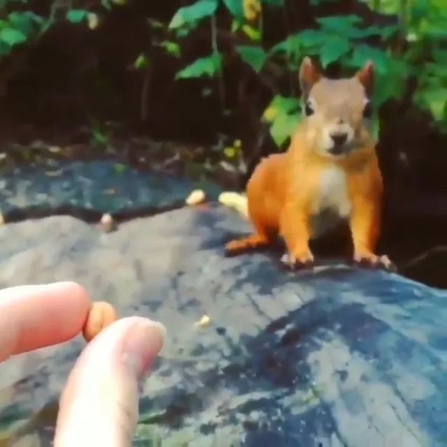 Lovely squirrel eating seeds