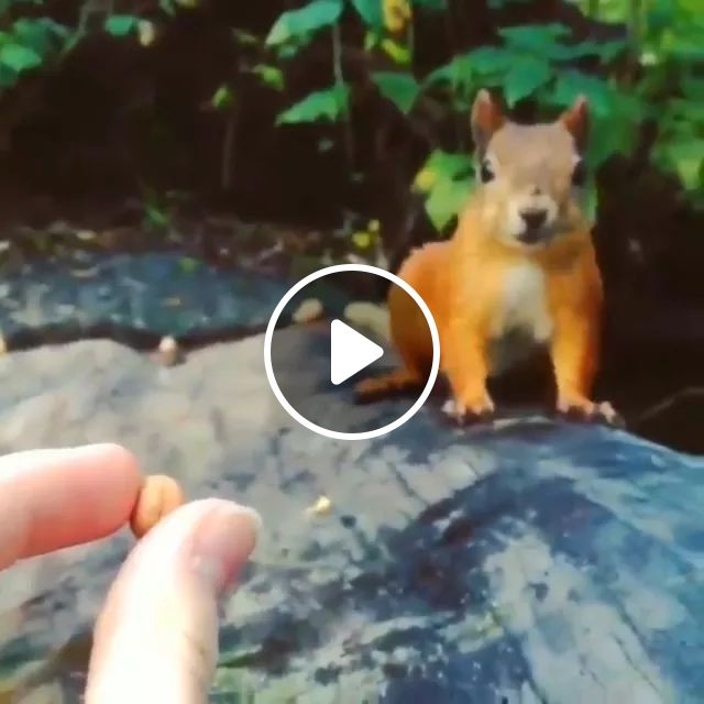 Lovely Squirrel Eating Seeds - Video & GIFs | squirrel, eat, animal food, food, nature, swiss travel, adorble