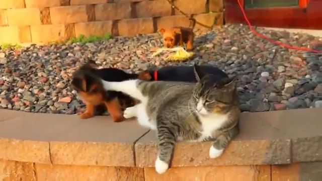 Cat doesn't want puppies to bother it