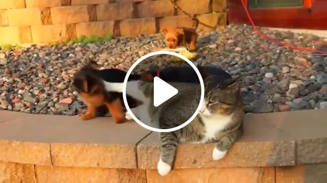 Cat Doesn't Want Puppies To Bother It - Video & GIFs | Cute puppies, smart cats, sunbathing, good for health, funny animals