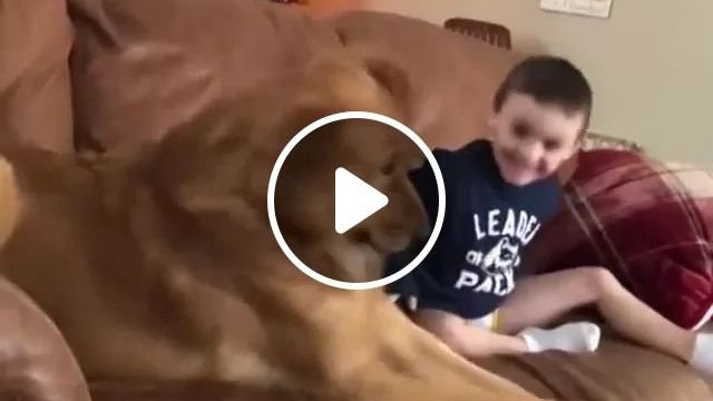 Dog Plays With Baby In Living Room - Video & GIFs | Smart dog, baby fashion clothes, interior living room