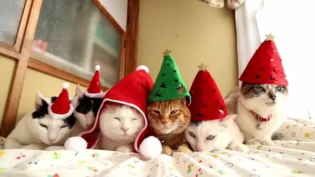 Warm Christmas of cats in bed