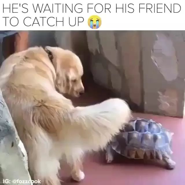 dog is waiting for turtle to follow it.
