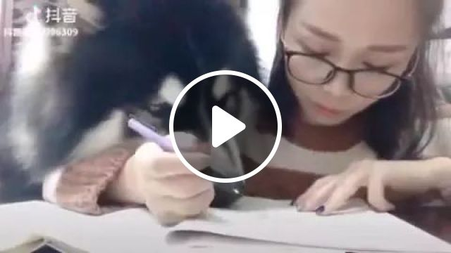 Dog Probably Wants To Do His Homework With Her - Video & GIFs   Cute dogs, dog breeds, diligent girls, women's fashion clothes, homework, school supplies