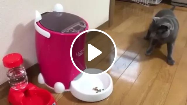 cat was startled when automatic pet feeder food dispenser started, Smart cats, animal feed machines, animals, pets, luxury apartments