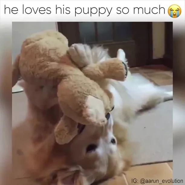 HE LOVES HIS PUPPY SOMUCH