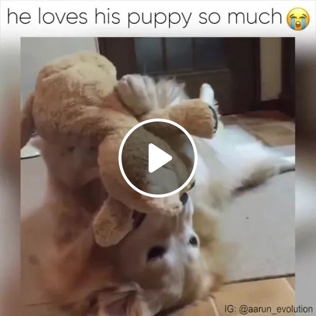 HE LOVES HIS PUPPY SOMUCH, dog, love, teddy bear, lovely, adorable