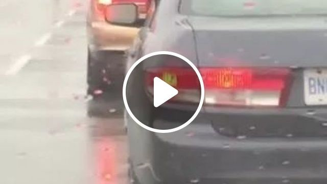 in street, it was raining, dog sat in luxury car, and let out a bark that looked like it was singing, street, raining, dog, adorable, sat, luxury car, let out a bark, looked, singing