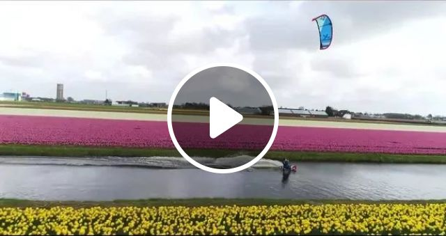 a man surfing kites on the river, two sides of river plant lots of colorful flowers, flowers, beautiful, fields, nature, surfing kites, rivers, colors, Travel Japan