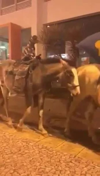 dog and a man riding horse across road - Video & GIFs | Cowboys, westerns, horse riding, dogs, streets, performances