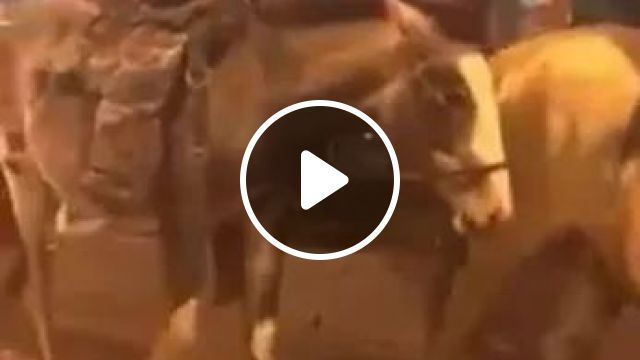 dog and a man riding horse across road, Cowboys, westerns, horse riding, dogs, streets, performances