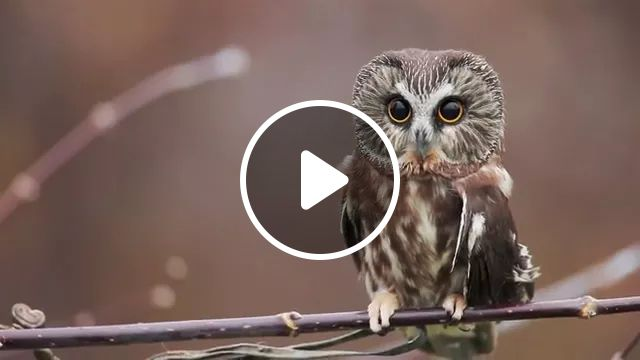 Application of camera rotation technology from owl, Application, technology, camera rotation, from owl, animal, auto