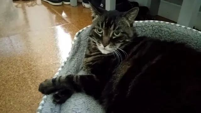 In living room, cat felt unhappy when a man jumped on the air mattress