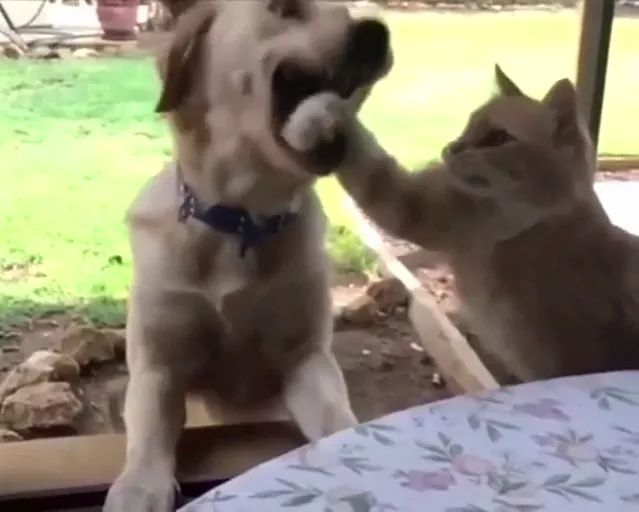 cat is faster than dog in taking food