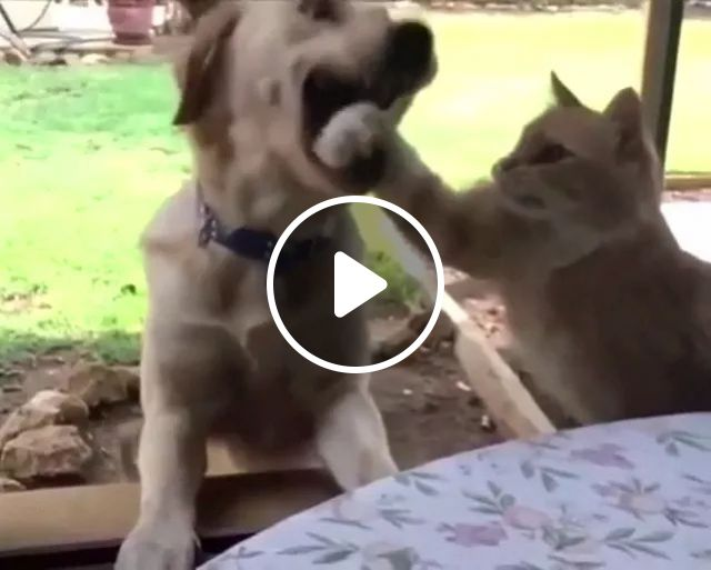 cat is faster than dog in taking food, Cute cats, dog breeds, funny animals, animal food