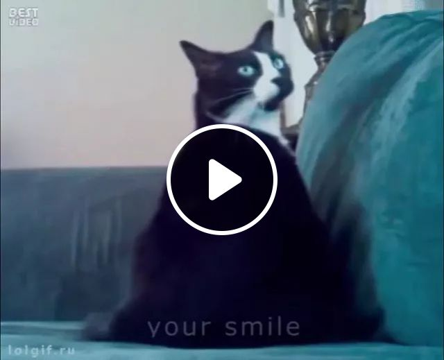 cat was surprised when girl appeared in living room