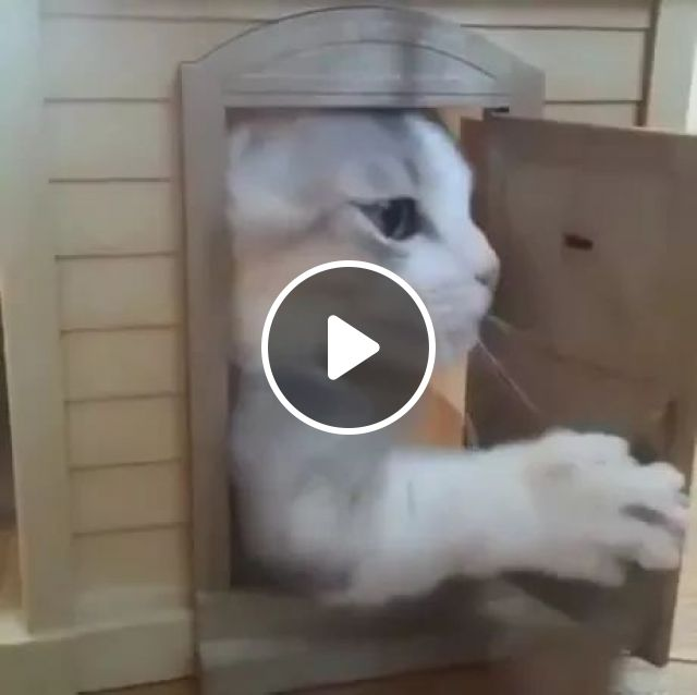 cat house,kitten closes door when its owner opens, cute kittens, animal care, cat breeds