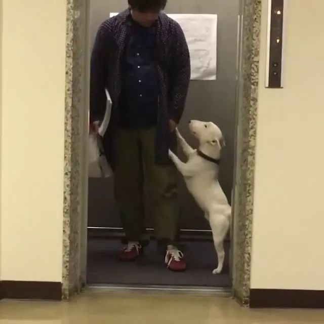 dog wants to dance in front of elevator