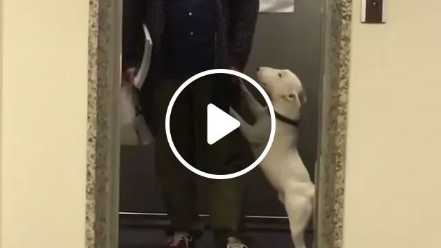 dog wants to dance in front of elevator, dogs, lovely, animals, pets, dancing, lifts