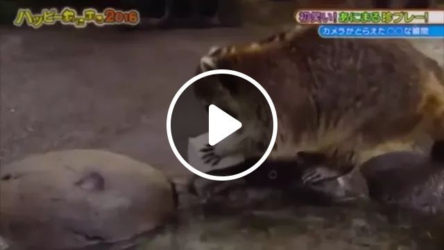Racoon Is Eating Cotton Candy At Stream - Video & GIFs | Cute raccoon, small streams, smart animals, pets