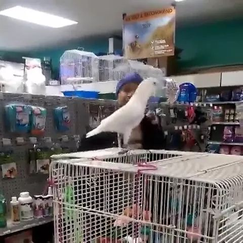 Parrot can dance