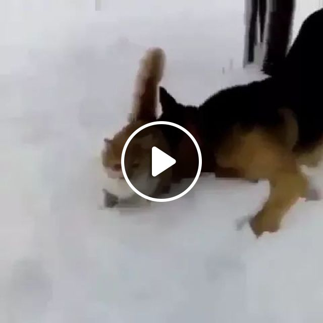 Cat is afraid to go on the snow, dog wants to play with cat, Cat, adorable, afraid, snow, dog, frendly, pet, wants, to play, winter