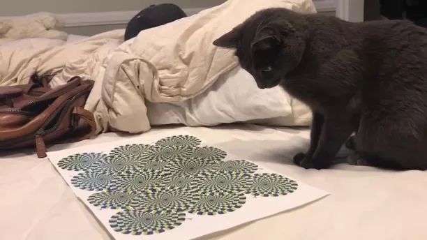Cat and figure