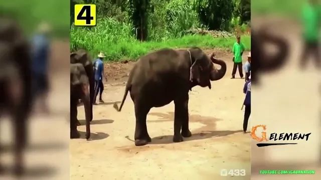 Smart elephant playing football in Thailand