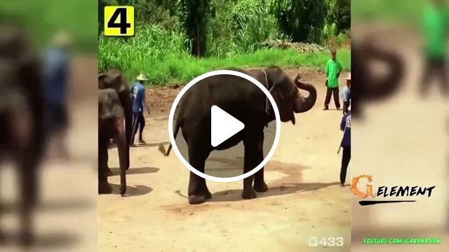 Smart elephant playing football in Thailand, Smart elephant, playing football, thailand travel