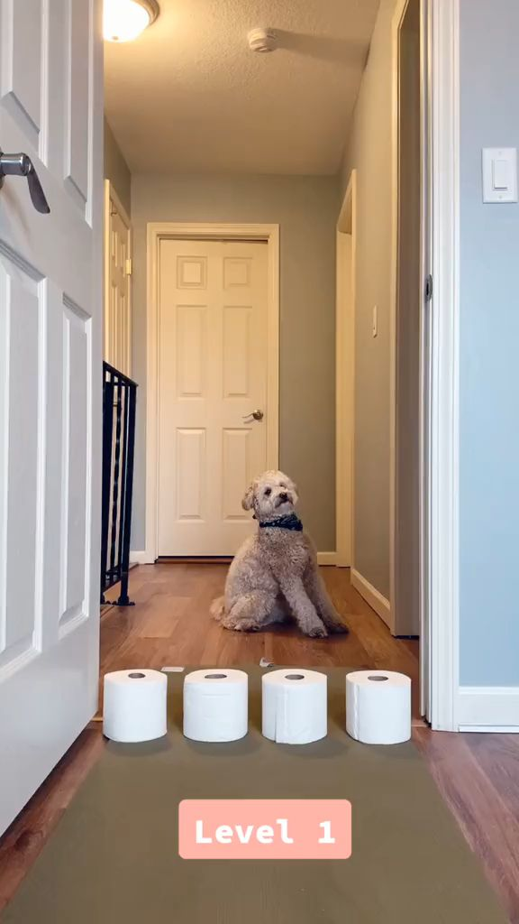 Removing Dog Smell from Carpets
