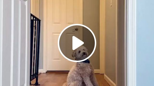 Removing Dog Smell From Carpets - Video & GIFs | Home and Garden, Housekeeping, Cleaning, Cleaning Up After Pets, Cleaning Up After Dogs