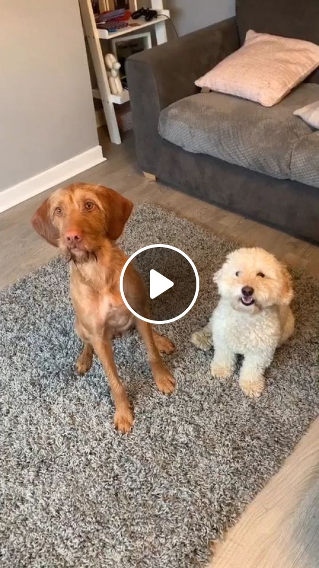 How To Train An Older Dog To Accept A New Puppy - Video & GIFs | Pets and Animals, Dogs, Senior Dog Care