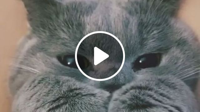 How Can Someone Hate Cats - Video & GIFs | cute cats, cute animals