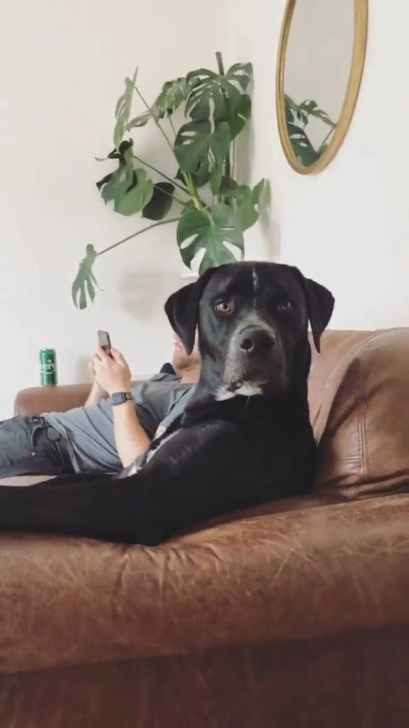 Remove a Dog from an Unsafe Environment - Video & GIFs | Pets and Animals, Dogs, Handling Dogs
