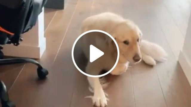 How To Remove Dog Smells - Video & GIFs | Home and Garden, Housekeeping, Cleaning, Cleaning Up After Pets, Pet Odors
