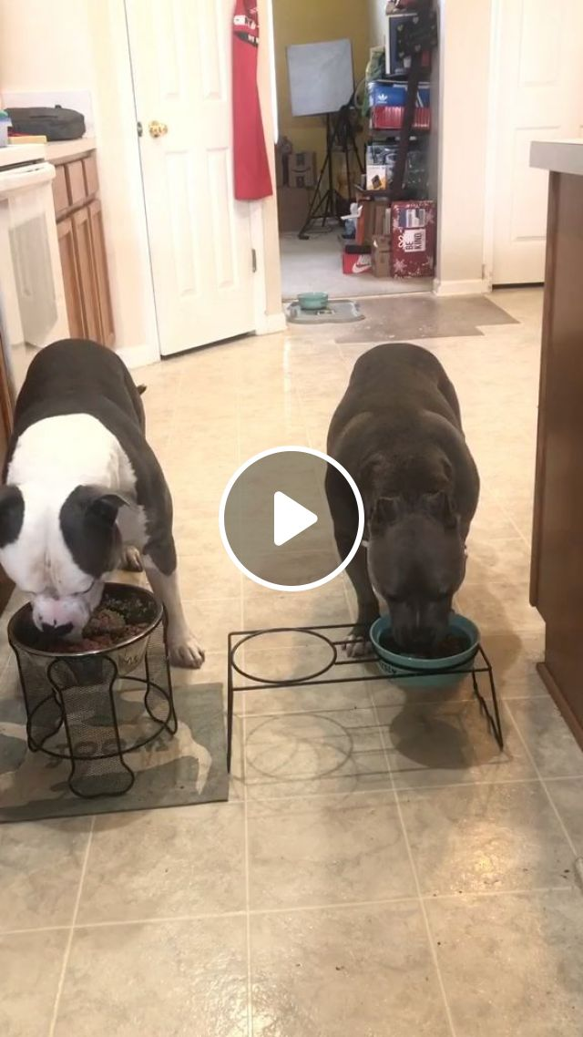 Clean-House Tips For Dog Owners - Video & GIFs | Home and Garden, Housekeeping, Cleaning, Cleaning Up After Pets, Cleaning Up After Dogs