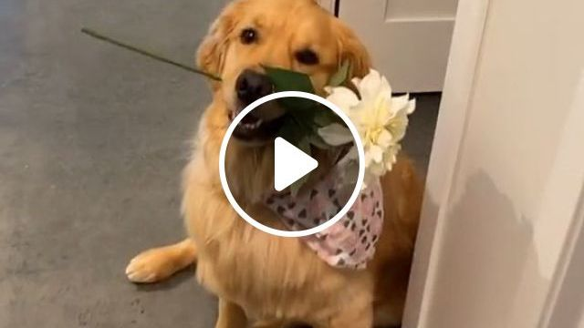 How To Be A Dog's Best Friend - Video & GIFs   Pets and Animals, Dogs