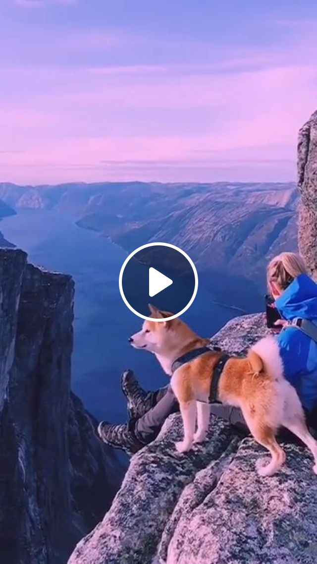 Most Dog-friendly Vacation Destinations In The US - Video & GIFs   Pets and Animals, Pets and Vacations, Pet Friendly Vacations