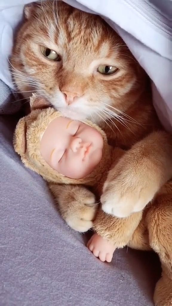 Cat wants a baby