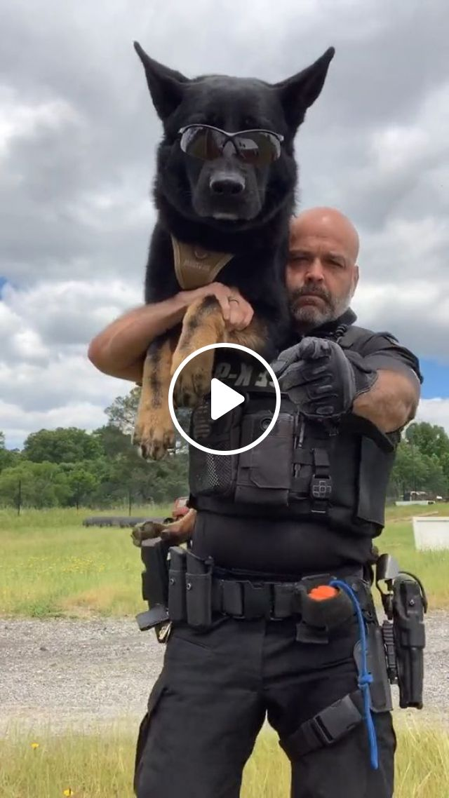 Trump Threatens White House Protesters With Vicious Dogs And Most Ominous Weapons - Video & GIFs | george floyd, vicious dogs, white house