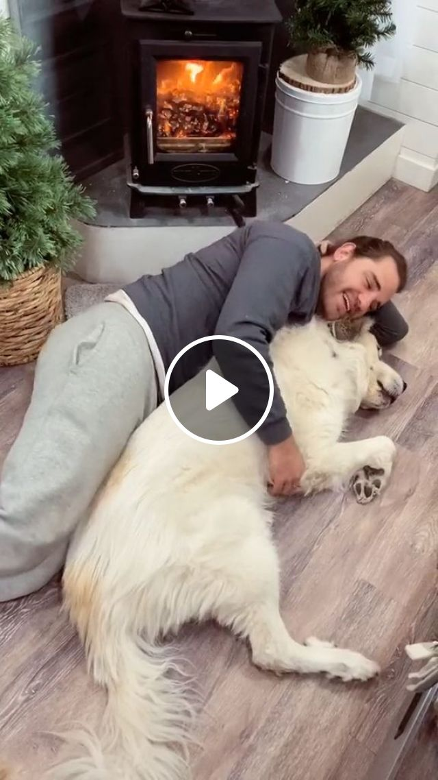 How To Help A Grieving Older Dog When Their Owner Dies - Video & GIFs | Pets and Animals, Dogs, Senior Dog Care
