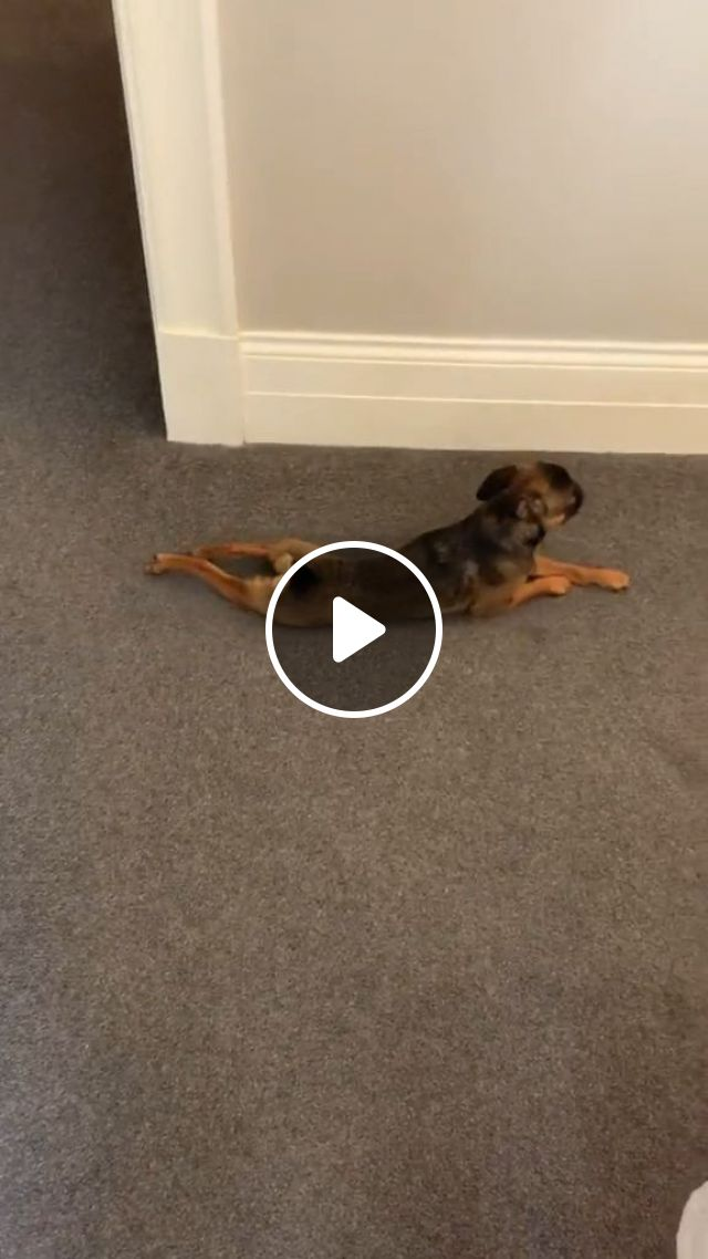 How To Get Rid Of Dog Urine From Carpet - Video & GIFs   Home and Garden, Housekeeping, Cleaning, Cleaning Up After Pets, Cleaning Up After Dogs