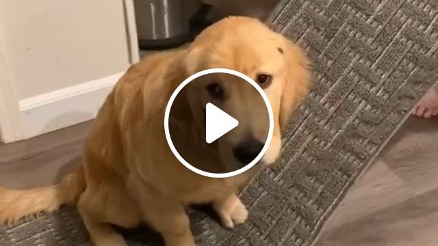 Getting Rid Of Dog Urine - Video & GIFs | Home and Garden, Housekeeping, Cleaning, Cleaning Up After Pets, Pet and Animal Stain Removal