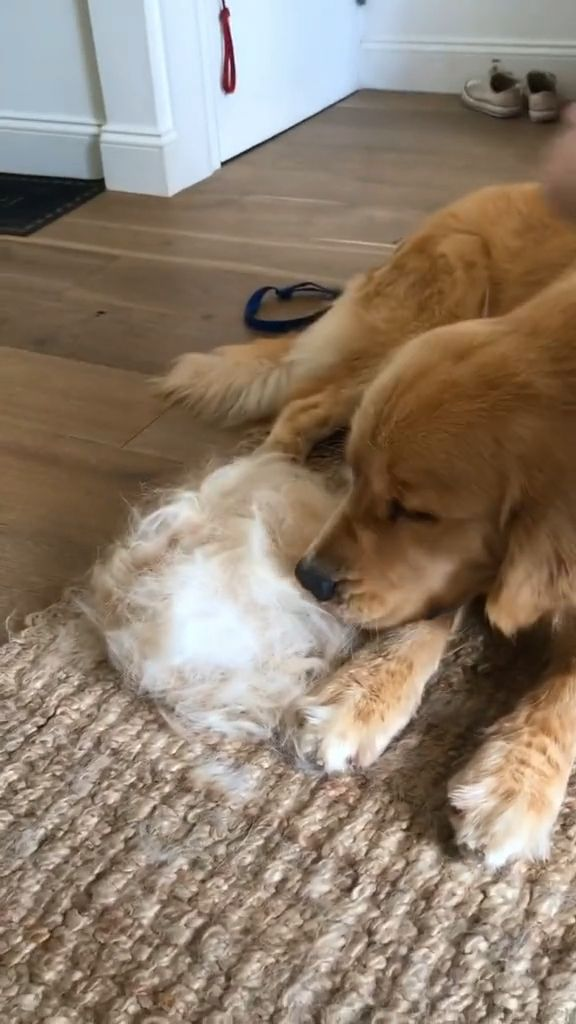 How to Remove Dog Hair from Furniture